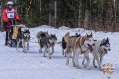Internationales_Schlittenhunderennen_Todtmoos_15_von_49.jpg