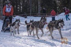 Internationales_Schlittenhunderennen_Todtmoos_35_von_49.jpg